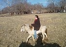 Pony Mare for Sale in , Missouri