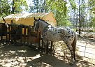 - Stallion in Hayfork, CA