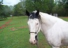 - Stallion in Pollok, TX