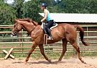 Flashy Felipe - Gelding in Allenwood, PA
