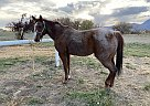Little girl - Mare in Mancos, CO