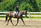 Thoroughbred Mare for Sale in Blue Bell, Pennsylvania