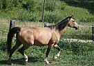 Quarter Horse Mare for Sale in Strum, Wisconsin