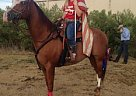 - Gelding in Grapevine, TX