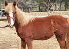 Quarter Horse Mare for Sale in Dandridge, Tennessee
