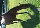 - Gelding in Nashville, TN