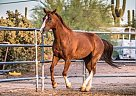Bill - Gelding in Phoenix, AZ