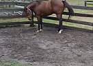 Usimpledbest - Stallion in Ocala, FL