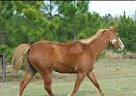 Paint Mare for Sale in Rincon, Georgia