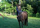 - Stallion in Shorter, AL
