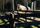 - Gelding in Greensboro, NC