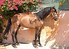 Estel Kaino - Stallion in Elche,