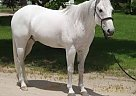 - Gelding in Miami, FL