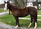 Brandy - Mare in Oley, PA