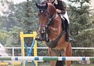 - Gelding in Michaelisbruch,