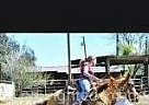 Quarter Horse Mare for Sale in Oakdale, California