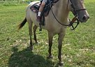 - Gelding in Rock Creek, OH