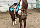 - Gelding in Marine City, MI