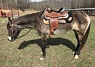 - Gelding in Wallingford, KY