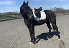 Whiskey - Gelding in Middletown, MD