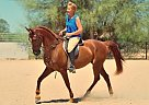 TL First Knight - Gelding in Cave Creek, AZ
