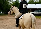 Quarter Horse Gelding for Sale in Stevens Point, Wisconsin