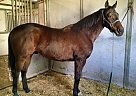 - Gelding in Middletown, DE