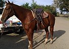 - Gelding in Merced, CA