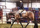 - Gelding in Marysville, OH