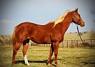 Quarter Horse Mare for Sale in Russellville, Missouri