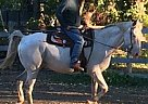 - Gelding in New Paltz, NY