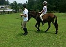 - Stallion in Sharpsburg, GA