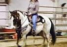 Paint Stallion for Sale in Monroe, Oregon