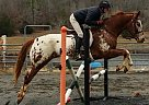 - Gelding in Bonnerdale, AR