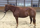 - Gelding in Chadds Ford, PA