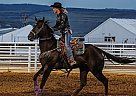 Blue Got Game - Gelding in Granby, CO