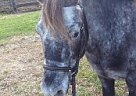 - Gelding in St. Williams, ON