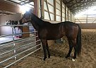 Nada - Stallion in Versailles, KY