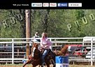 Quarter Horse Stallion for Sale in Bee Branch, Arkansas