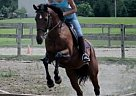 Thoroughbred Mare for Sale in Urbana, Ohio