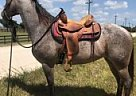 Quarter Horse Mare for Sale in Vero Beach, Florida