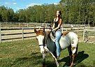 - Gelding in North Attleboro, MA