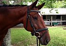 - Gelding in Destin, FL