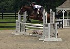 Thoroughbred Mare for Sale in Jefferson, Maryland