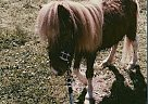 chester - Stallion in locust fork, AL