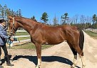 jacob - Gelding in EdenValley, ON