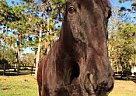 - Stallion in Bradenton, FL