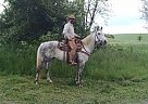 - Gelding in Rural Retreat, VA