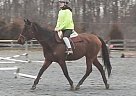 Thoroughbred Mare for Sale in Gettysburg, Pennsylvania