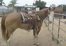 - Gelding in Wickenburg, AZ